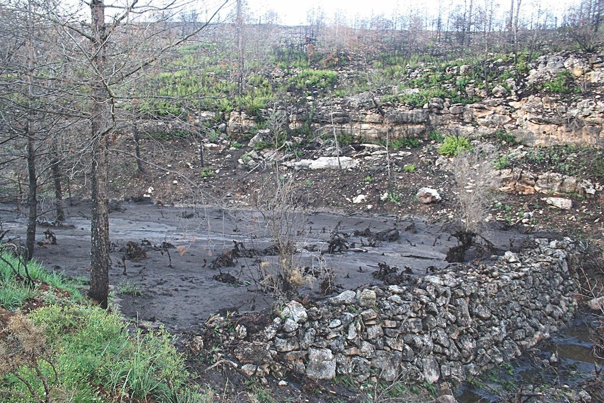 Tras los incendios aumenta la pérdida de suelo - ciclo hidrológico