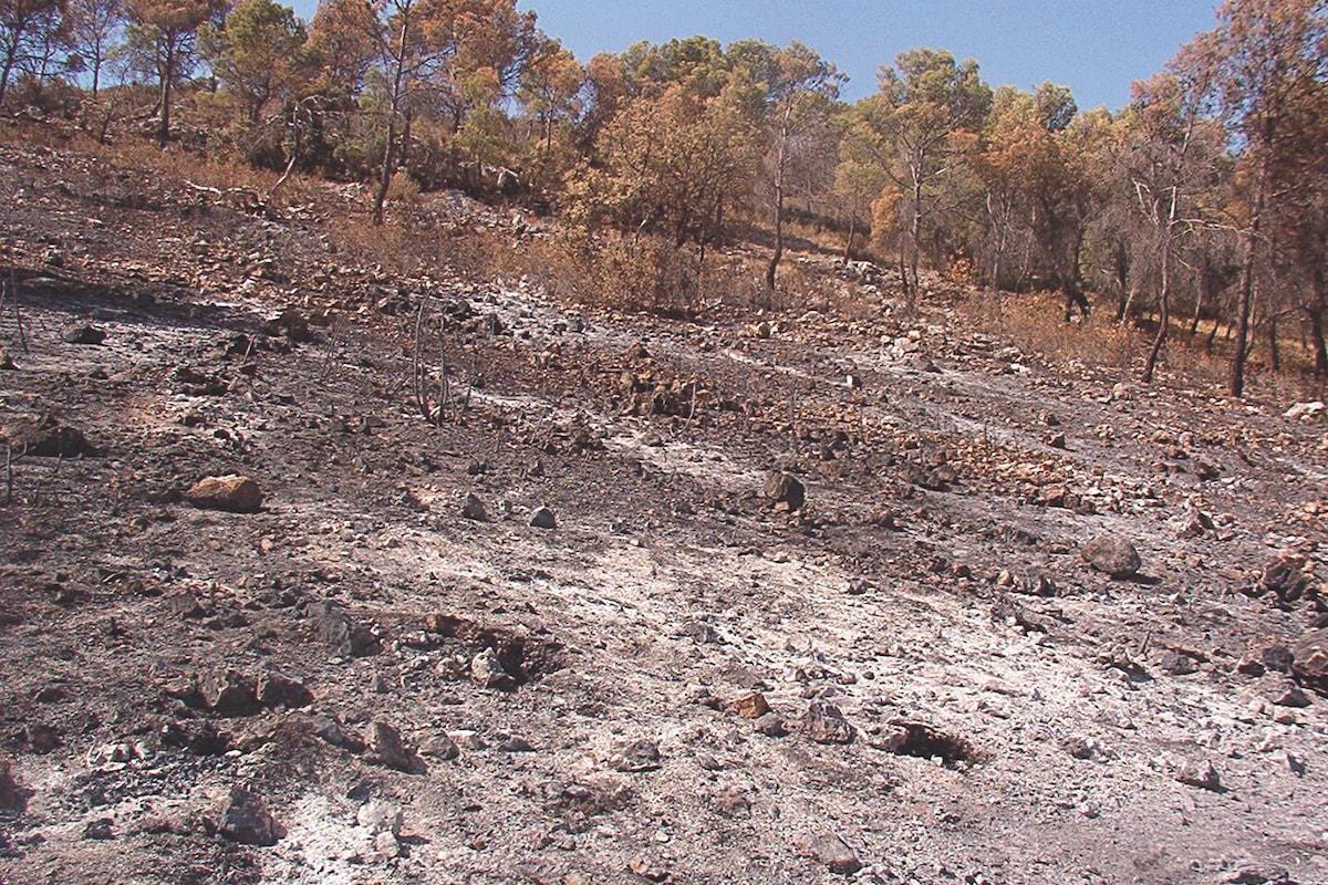 Pinoso (Alicante) una semana después del incendio de 2003