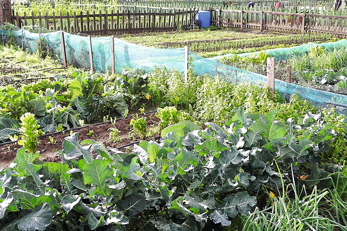 La salud de las plantas del huerto