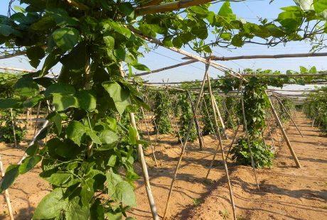 Catálogo valenciano de variedades de interés agrario