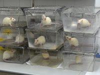 Comunicación en investigación con animales