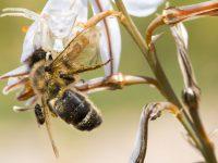 fotografía araña abeja mosca Roberto García Roa