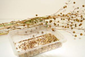 Un cuento de semillas