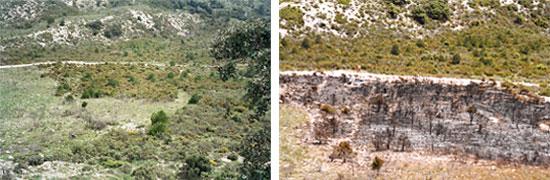 Parcela en Tivisa antes y después de realizar la quema controlada