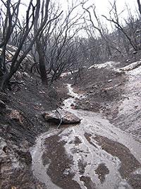 Consecuencias de las lluvias después de un incendio en el Monte Carmelo (Israel)