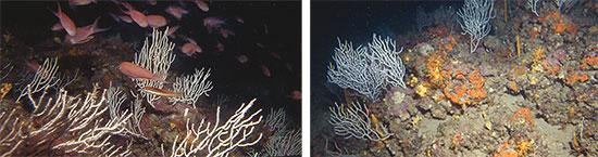 66-46mosaic bosques marinos