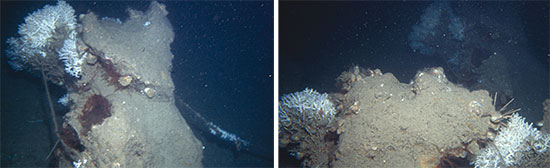 67A-46MOSAIC bosques marinos