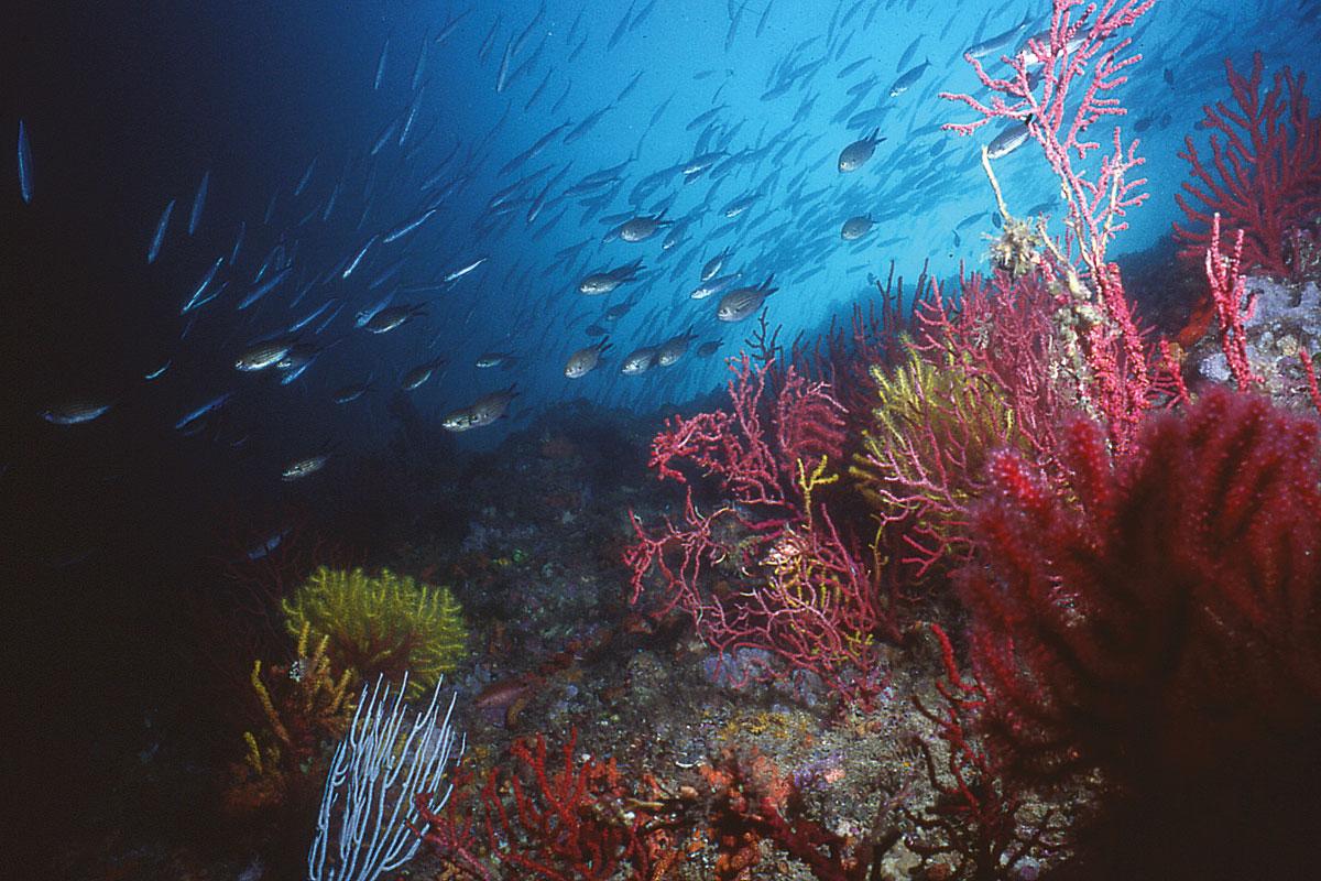 bosques marinos portada