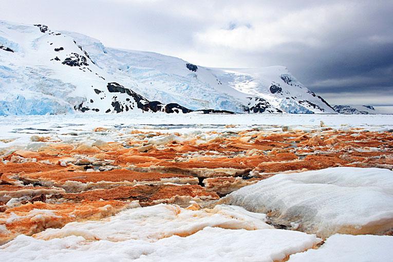 Resultado de imagen de Los organismos psicrófilos crecen en minúsculos granos de polvo atrapados en el hielo, en cuyos alrededores hay pequeñas cantidades de agua líquida.