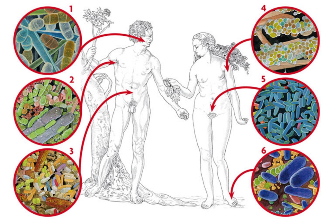 microbiota y sistema inmune pdf