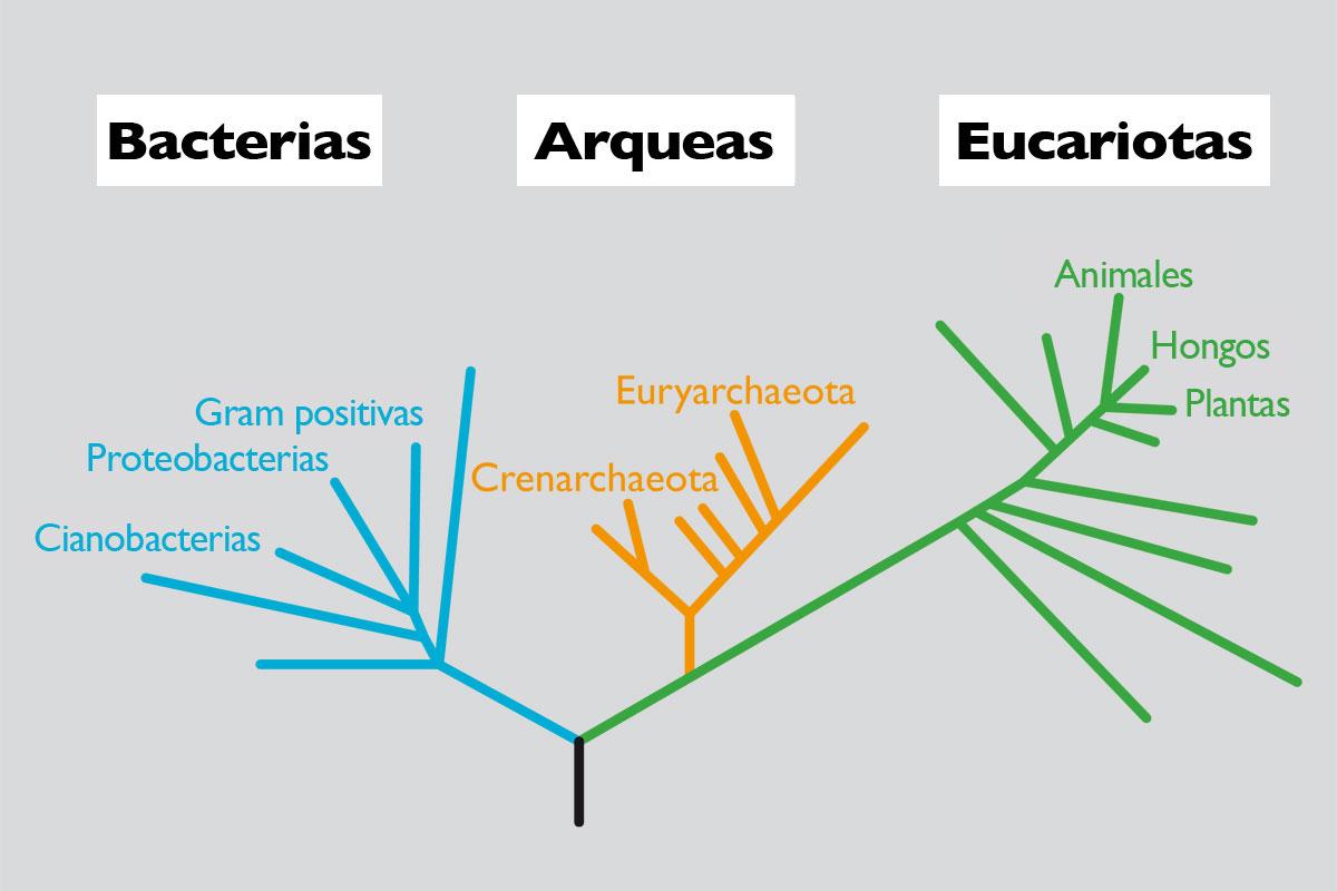 El tamaño del genoma y la complejidad de los seres vivos