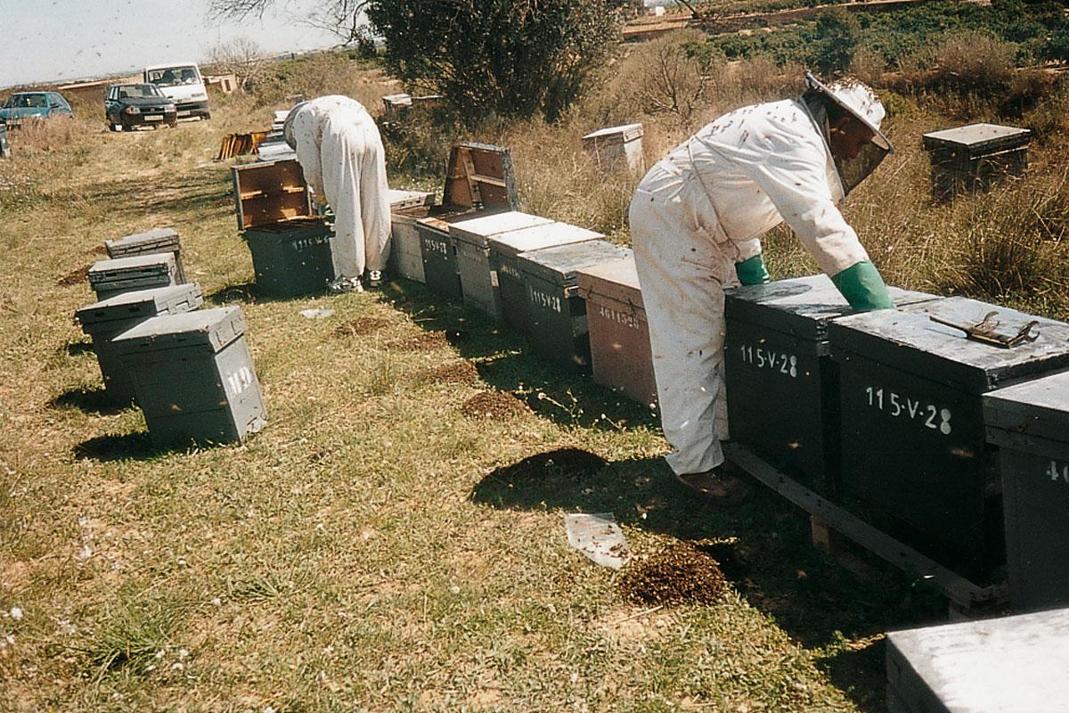 Las abejas de la miel y la polinización