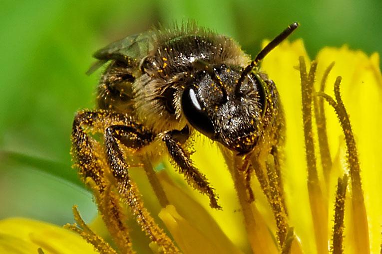 abelles1