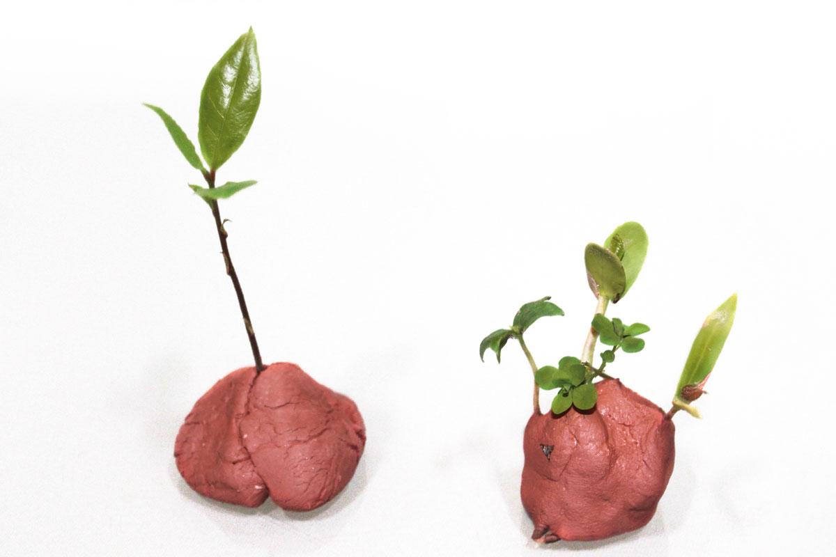 Reforestación con bolas de arcilla y semillas