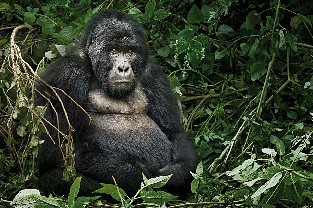 Movimientos de dispersión en los primates