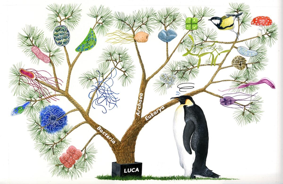 El gran árbol de la vida basado en el RNA ribosómico
