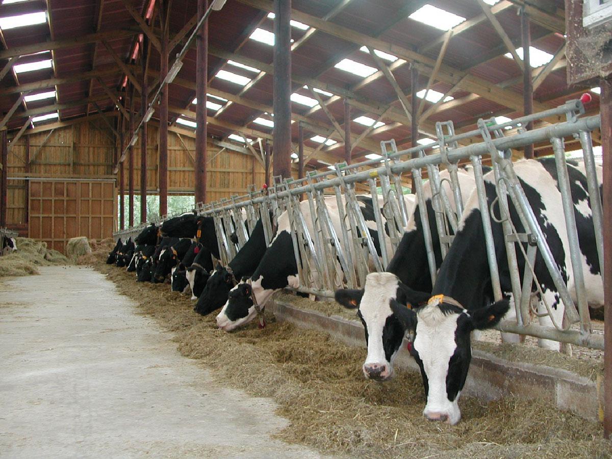 crisis sanitarias vacas locas