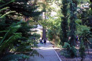Unos visitantes dibujan el paisaje en el Jardín Botánico. - experiencias divulgador