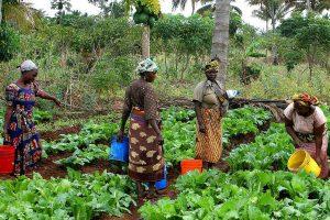mujeres agrícolas ante el cambio climático