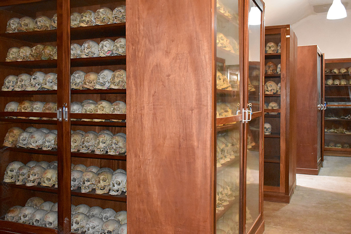 colecciones osteológicas