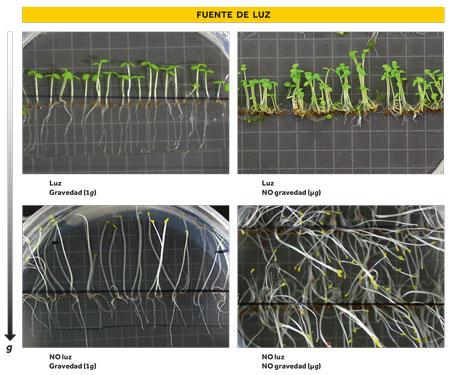 efectos luz plantas