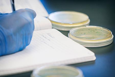 mejora genética biotecnología