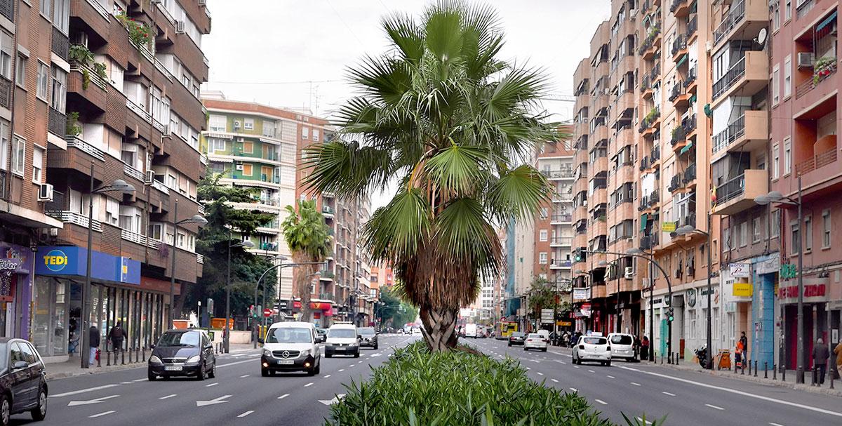 washingtonias árboles en la ciudad