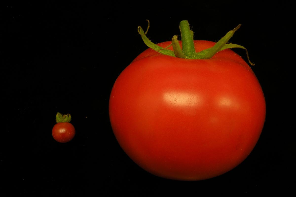 edición de genes en plantas