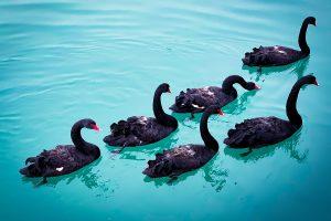 coronavirus cisnes negros