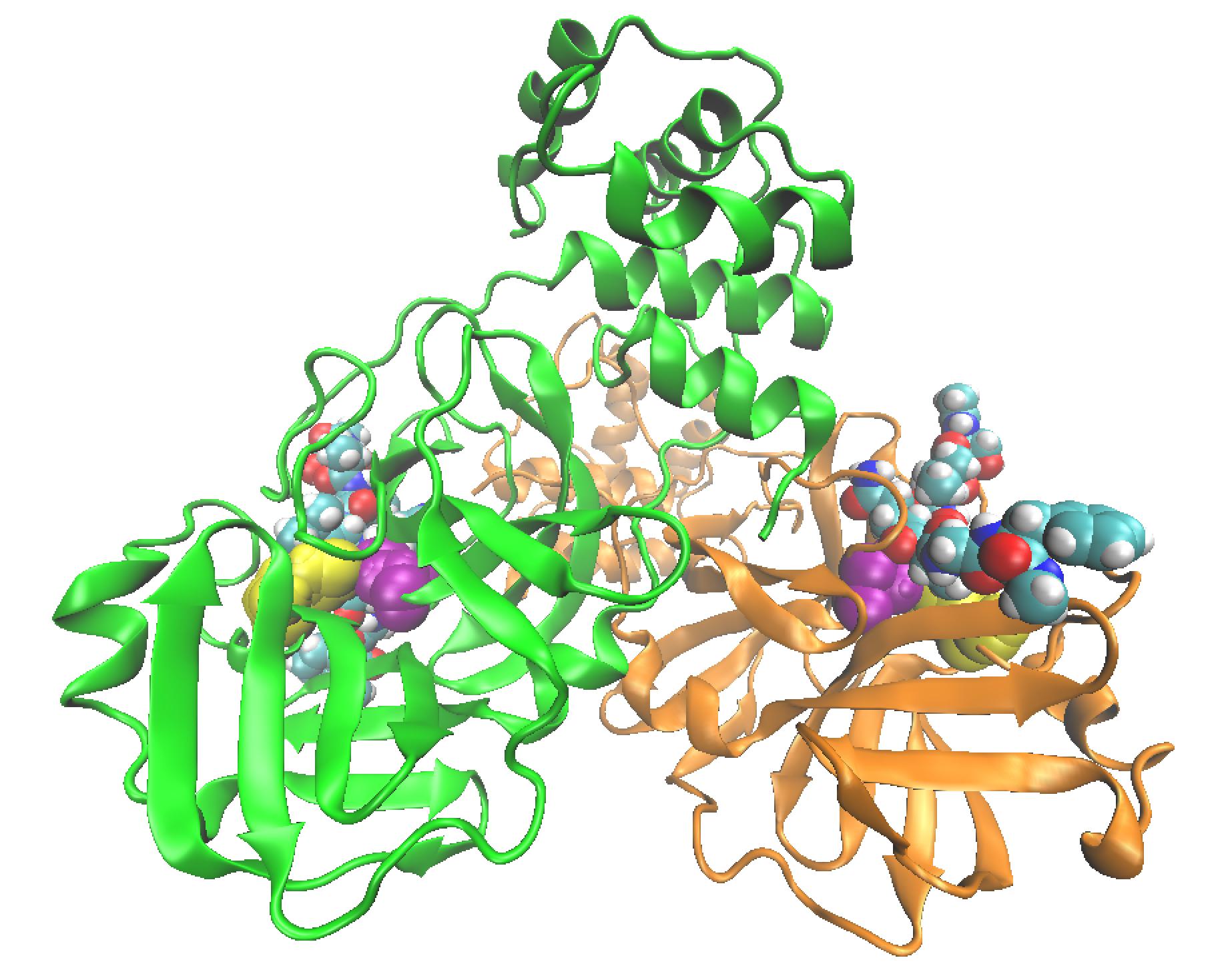 figura 2 proteasas coronavirus