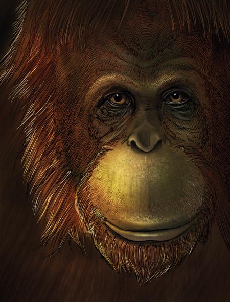 primate huellas pasado